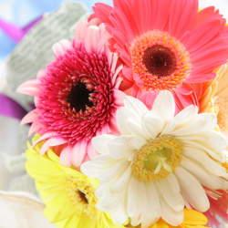 【花束の色に迷う人必見】送別会で送る花束を選ぶときに役立つ、男女別オススメの花色は?