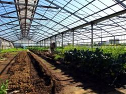 【ITが農業の生産コストを半分以下に!】日本の農業を変える大注目のIT農業とは