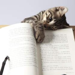 英語初心者におすすめしたい洋書!英語の語彙を増やしたい人におすすめの洋書3選