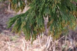 花粉が舞い散る季節にお悩みのビジネスマンに朗報!花粉症は治せる病気なのかもしれないと噂が…