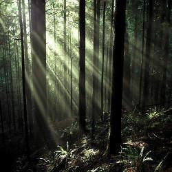 【初心者の為のマーケティング用語解説】「金のなる木」の意味とマーケティングとしての活用法