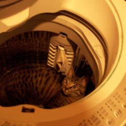 【洗濯の仕方】勝負服のワイシャツがシワだらけにならないコツは脱水にあった