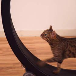 飼い猫をとっとこ走らせるホイール型のランニングマシン「OneFastCat」