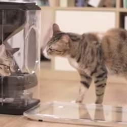 家に残してきた猫、心配じゃありませんか?猫の顔を認識して自動で餌やりする給餌機「Bistro」