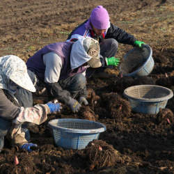 【コラム】農業イノベーションで会計人にも商機