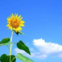 自分の頭で考え、志を貫く生き方を学ぶ 『人生を楽しみたければ ピンで立て! 』