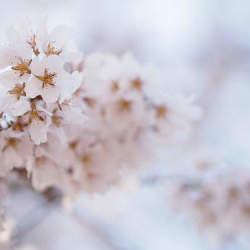 インテリアにも季節感を。春らしさで部屋の中を満たすためのインテリアコーディネート