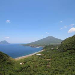 八丈島の経済を支える謎の植物「ロベ」って何のこと? 観光だけじゃない、離島ビジネス最前線を追う