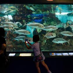 新たな水族館・博物館が地方活性化の起爆剤に! 水族館大国・日本で大企業が挑む、水族館のカタチ