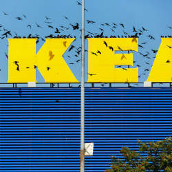 なぜ主婦は「IKEA」に踊らされるのか? 怒る國分功一郎と煽る古市憲寿による『社会の抜け道』