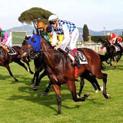 ダービー制覇の競走馬は、馬づくり素人の牧場から生まれた。ゼロからの経営学:『世界一の馬をつくる』
