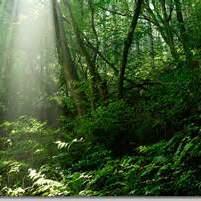 スローライフの本質的な意味に迫る:古典的名著・ソローの『森の生活』を読み解く