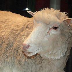 """""""羊のドリー""""から20年:ヒトクローン誕生で変わる未来への賛否"""