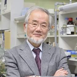 「役に立つという言葉が社会を駄目にしている」:ノーベル賞受賞・大隅良典氏が危惧する科学研究の今