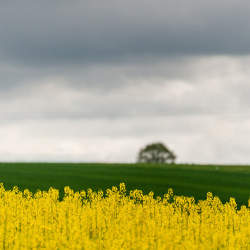 オランダを世界第2位の農業大国に押し上げたスマートアグリ:農業×ITの相乗効果が日本の救世主に
