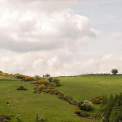 驚異のGDP成長率26%を示すアイルランド:急成長の裏にある「タックスヘイブン」という闇