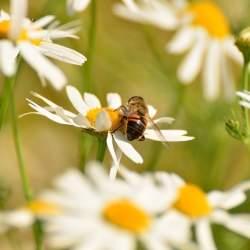 虫嫌いは閲覧注意! いつか当たり前になるかもしれない「昆虫食」の可能性について考える