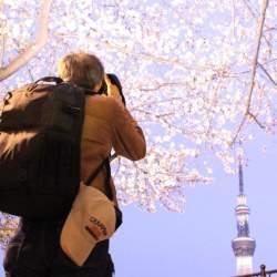 【花見幹事の役立ちマニュアル】花見当日までの段取り7ステップ&知っておきたい基本マナー