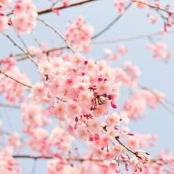 定番でも場所取りしやすい穴場!宴会可能な東京都内の花見スポット6選&花見の持ち物