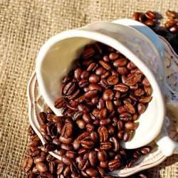 """コーヒー好きなら知ってて当然! """"動物のフン""""からできる高級コーヒー豆が新たなトレンドに?"""