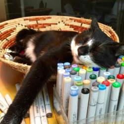 【Houzz】猫と人の幸せな暮らし:イラストレーター石川三千花さん、愛猫ネコゾーと暮らす日々