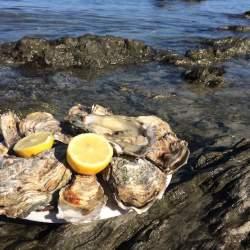 フランスの生牡蠣は日本と違う?ルイ14世も愛した、牡蠣の世界的名産地・カンカルを訪ねて