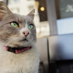 イスタンブールの猫はペットじゃなく野良。究極の猫映画「猫が教えてくれたこと」