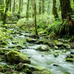 音と香りでオフィスに森を再現!法人向けサブスクサービス「森のアロマ」