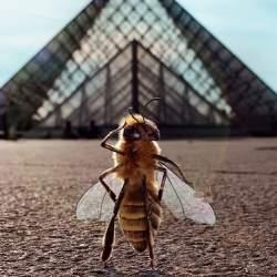 14万フォロワーの「ミツバチのインフルエンサー」!ミチバチ減少問題啓発のため