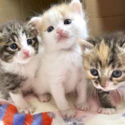 犬猫の殺処分ゼロのため遺産を寄付するという選択肢 どうぶつ基金と三井住友銀行が協定を締結