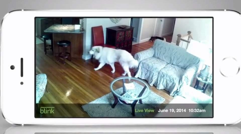 もう家に残したペットの心配は不要!どこにでも設置できる小型室内カメラ「Blink」 7番目の画像