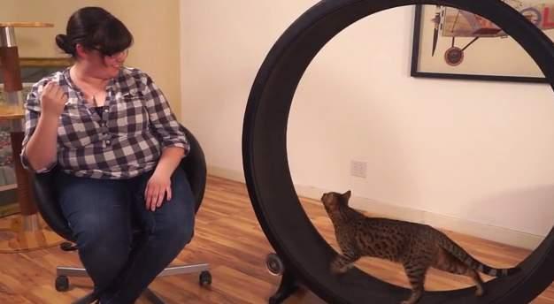 飼い猫をとっとこ走らせるホイール型のランニングマシン「OneFastCat」 4番目の画像