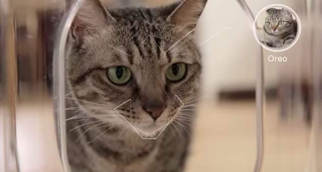家に残してきた猫、心配じゃありませんか?猫の顔を認識して自動で餌やりする給餌機「Bistro」 5番目の画像