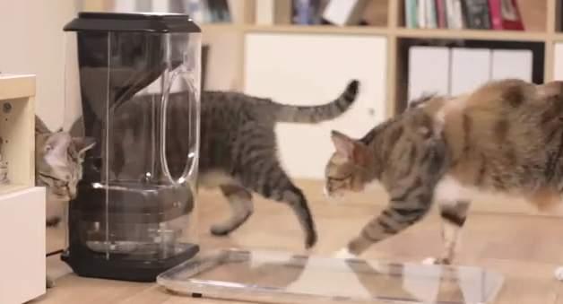 家に残してきた猫、心配じゃありませんか?猫の顔を認識して自動で餌やりする給餌機「Bistro」 8番目の画像