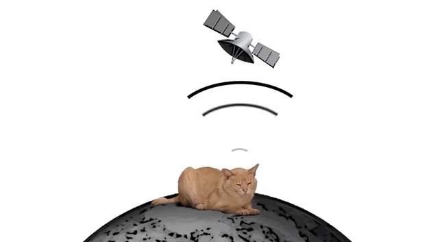 突然猫がいなくなっても大丈夫!猫のためだけに作られた首輪型GPSトラッカー「Pawtrack」 3番目の画像