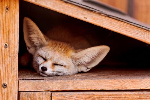 質を高め、眠る時間を長くする!仕事を効率よく進めるための睡眠の取り方の工夫 1番目の画像