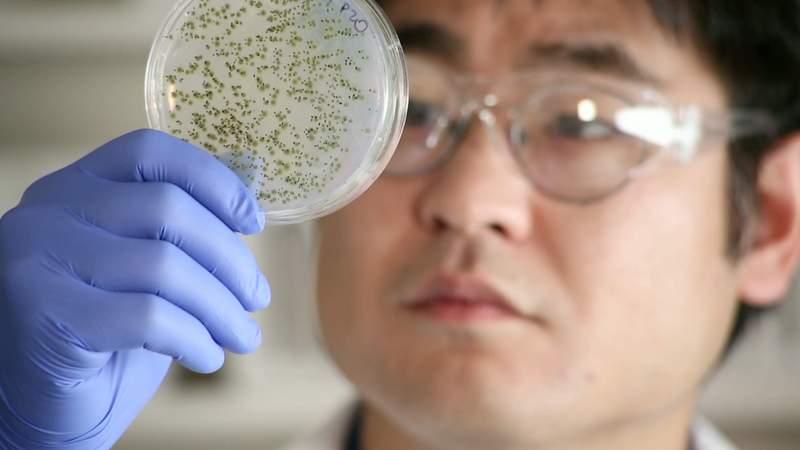 特許フリーの治療薬が開発中? 低価格、低リスクの治療薬でがん治療のあり方が変わる 1番目の画像