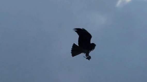 iPhoneで簡単操縦! 鳥型ドローン「Bionic Bird」で空を縦横無尽に飛び回れ 3番目の画像