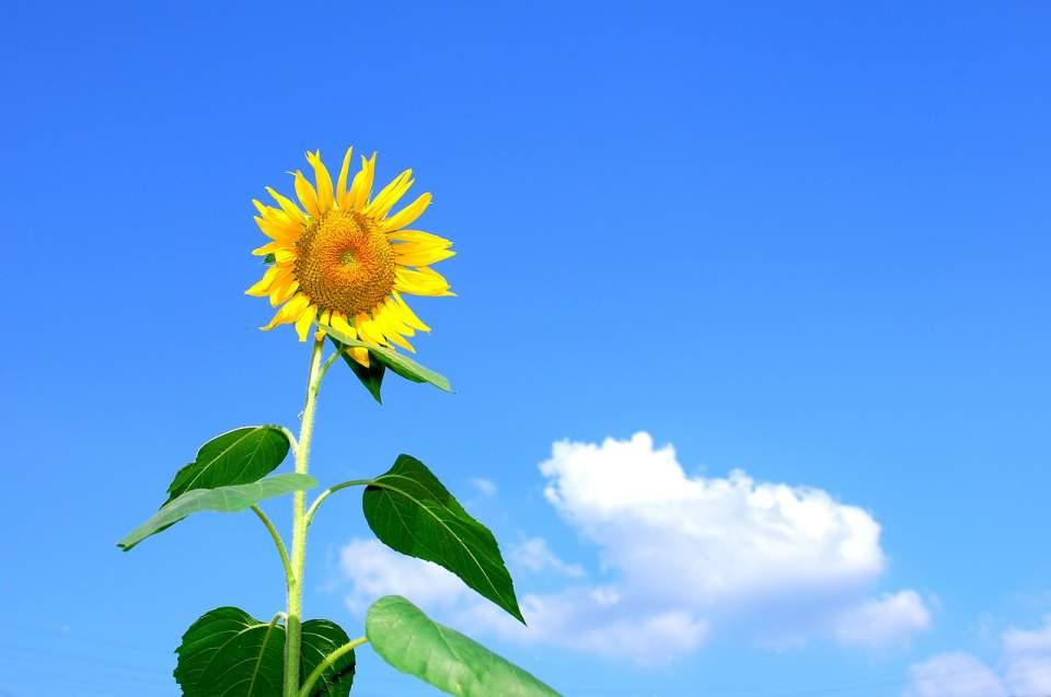 自分の頭で考え、志を貫く生き方を学ぶ 『人生を楽しみたければ ピンで立て! 』 1番目の画像
