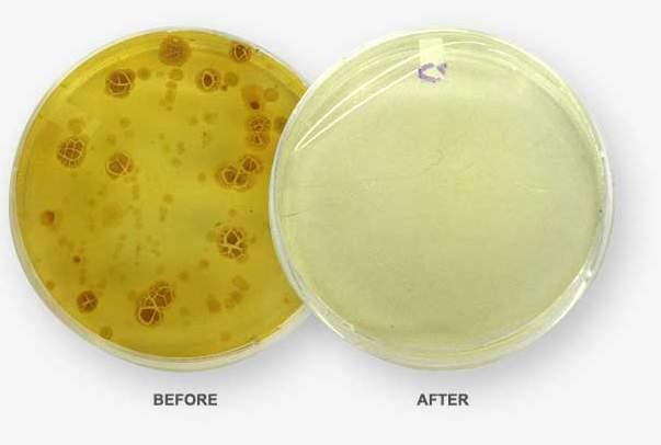 実はトイレの何倍も汚いスマホのディスプレイ。充電器で手軽に殺菌・消毒しませんか? 3番目の画像