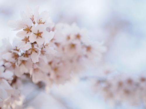 インテリアにも季節感を。春らしさで部屋の中を満たすためのインテリアコーディネート 1番目の画像