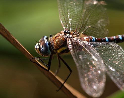 自然をお手本にした心地よい風。シャープの扇風機に搭載される「ネイチャーウイング」 2番目の画像