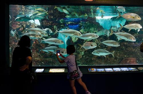 新たな水族館・博物館が地方活性化の起爆剤に! 水族館大国・日本で大企業が挑む、水族館のカタチ 1番目の画像