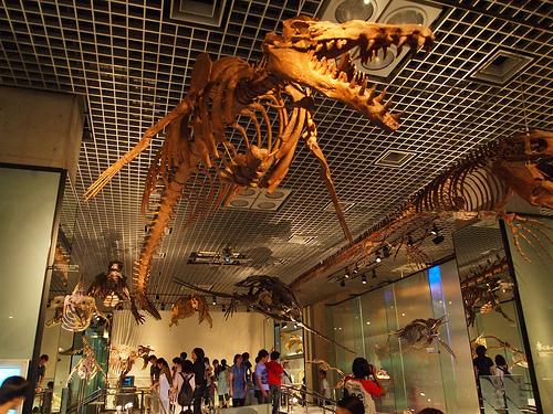 新たな水族館・博物館が地方活性化の起爆剤に! 水族館大国・日本で大企業が挑む、水族館のカタチ 4番目の画像