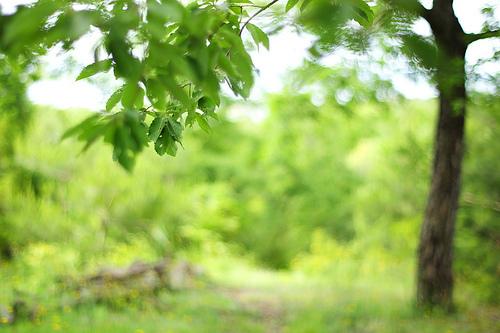 スローライフの本質的な意味に迫る:古典的名著・ソローの『森の生活』を読み解く 1番目の画像