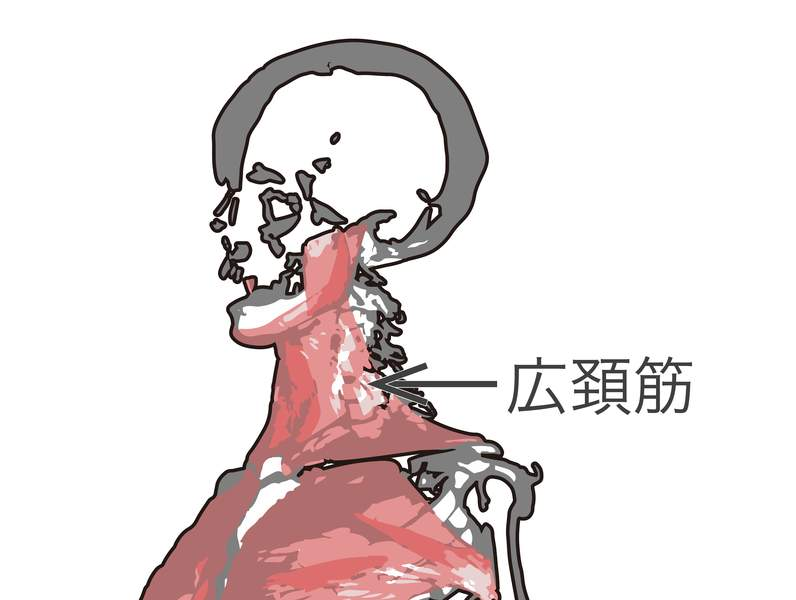「スマホの使いすぎで顔が老ける」現代の恐怖 フェイストレーナーが語る、肩こり・老け顔対策法 4番目の画像