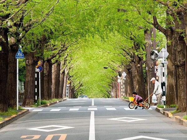 誰もが羨む、東京の高級住宅街を一挙ご紹介! 東京都におけるセレブエリアの条件とは? 5番目の画像