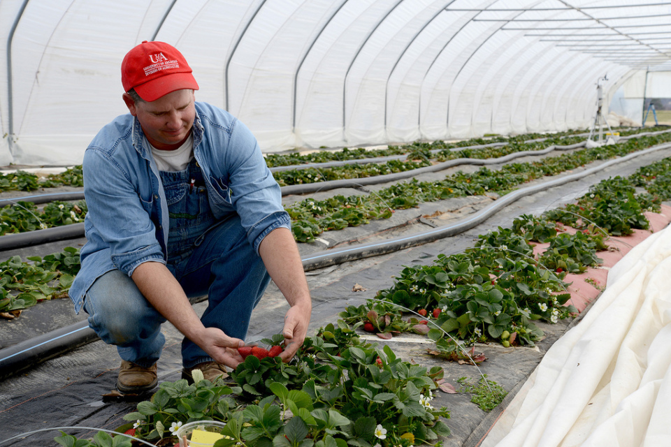 """「日本一小さい農家」が明かす、小予算で起農する""""5つの戦略"""":『農で1200万円!』 3番目の画像"""