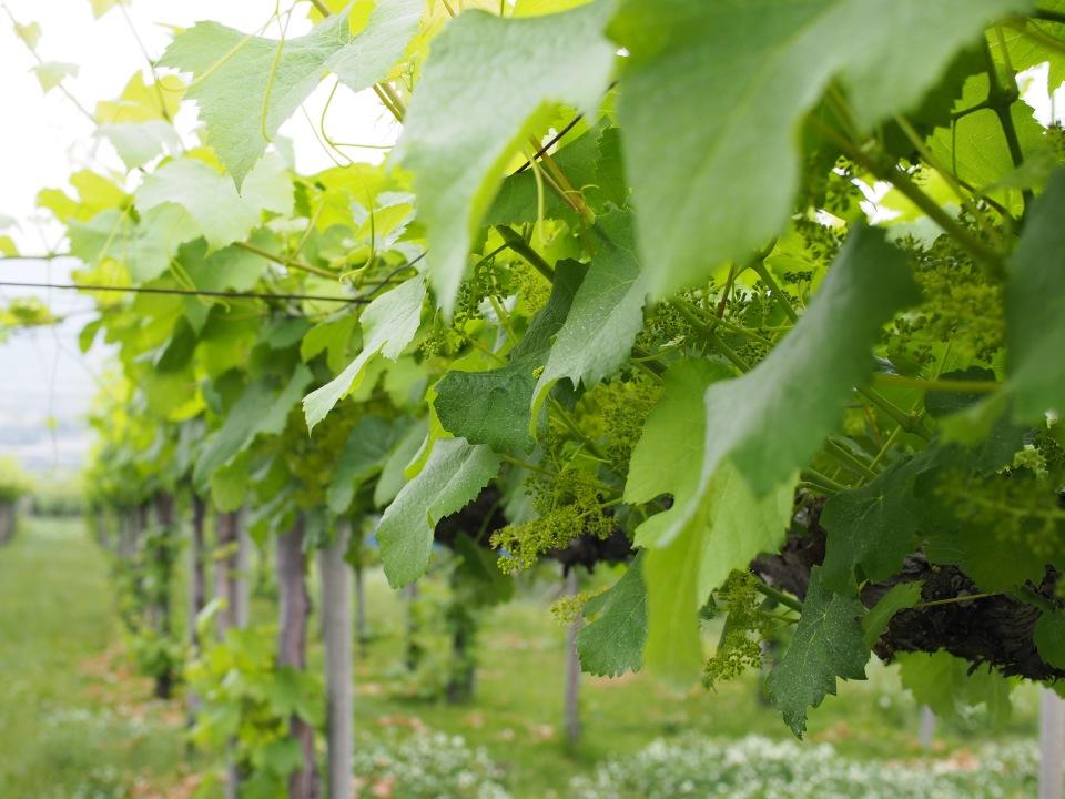 """酒類の消費量は20年前の約15%減:""""酒離れ""""が進むいま「日本ワイン」の販売量が増えるワケ 3番目の画像"""
