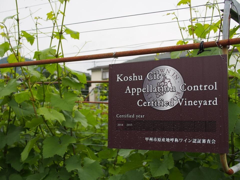 """酒類の消費量は20年前の約15%減:""""酒離れ""""が進むいま「日本ワイン」の販売量が増えるワケ 4番目の画像"""